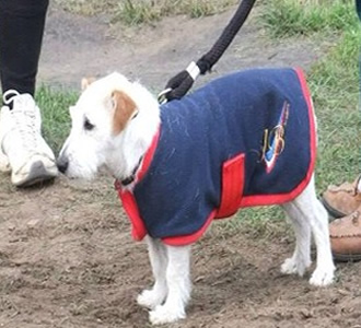 jb-academy-dog-jacket.jpg